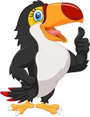 picture of toucan  - Vector illustration of Cartoon toucan gives thumb up - JPG