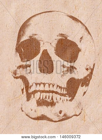 skull sketch on beige rough paper background