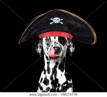 dalmatian dog in a pirate costume -- isolated on black