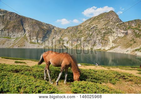 Brown horse in front of lake in Rila Bulgaria