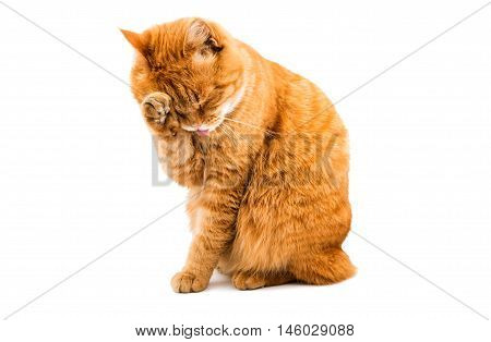 red cat washes on a white background