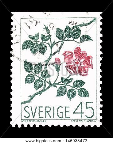 SWEDEN - CIRCA 1968 : Cancelled postage stamp printed by Sweden, that shows Rose.