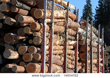 Wood Logs On Truck Trailer