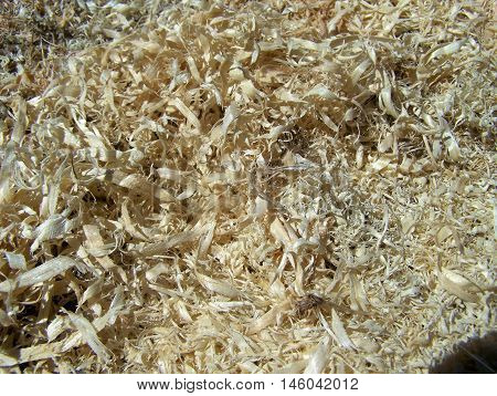 Sawdust result of the work in wood sawmills