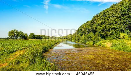 Creek through a rural area in the summer season. On the water surface on the foreground reed and plant residues are floating. On the field at the left hand sugar beets are grown.