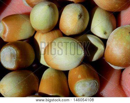 Small hazelnuts in nutshell on human palm
