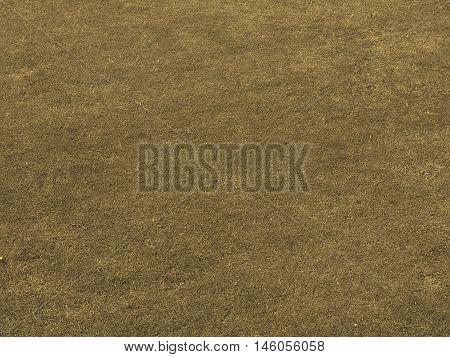 Grass Meadow Sepia
