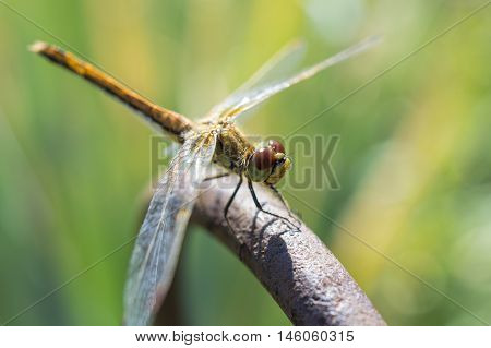 The Having A Rest Dragonfly