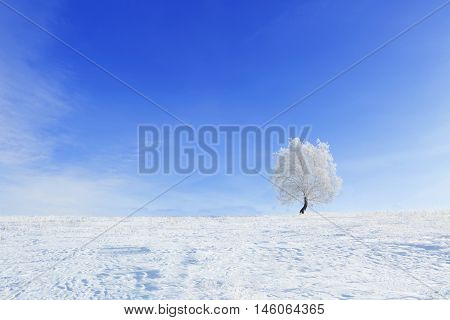 Alone Winter Tree In A Field With Blue Sky