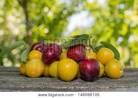 homegrown plums on wooden table in garden
