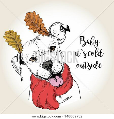 Vector close up portrait of english pittbull wearing the red scarf and oak leaf ears. Hand drawn domestic dog illustration. Baby it s cold outside. Autumn engraved funny illustration.