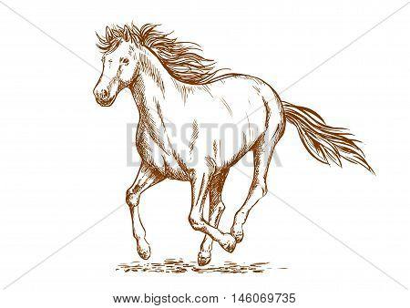 Brown horse sketch of running arabian mare horse. Equestrian sport, horse racing or t-shirt print design