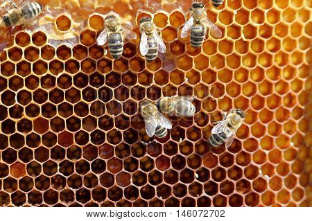 yellow honey cell with some working bees