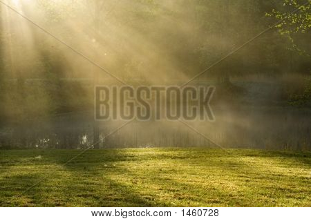 Foggy Spring Morning