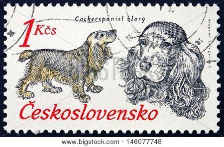 CZECHOSLOVAKIA - CIRCA 1973: a stamp printed in Czechoslovakia shows Cocker Spaniel Hunting Dog circa 1973
