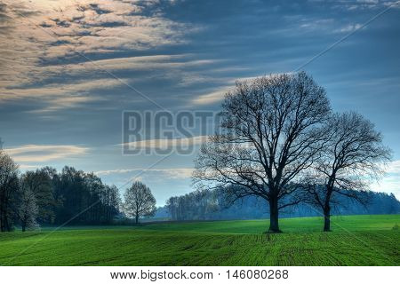 Spring countryside landscape. Oaks growing on the new green field. Masuria Poland.