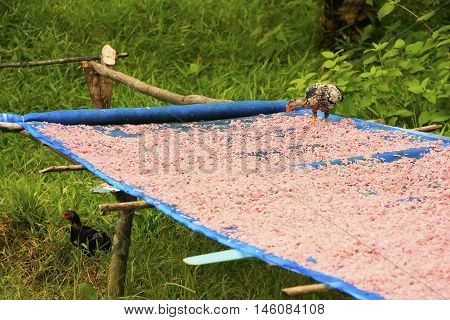 Table with dried shrimp in local village Ream National Park Cambodia Southeast Asia