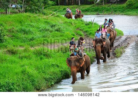 CHIANG MAI,THAILAND - November 13, 2015:Elephants and mahouts, while escorting tourists ridig elephants along the river in  Mae Wang, Chiang Mai.