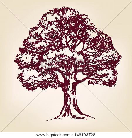 Tree hand drawn vector llustration realistic sketch