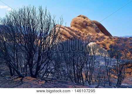 Charcoaled landscape with burnt chaparral plants after a wildfire with the sandstone Mormon Rocks beyond taken in Cajon, CA