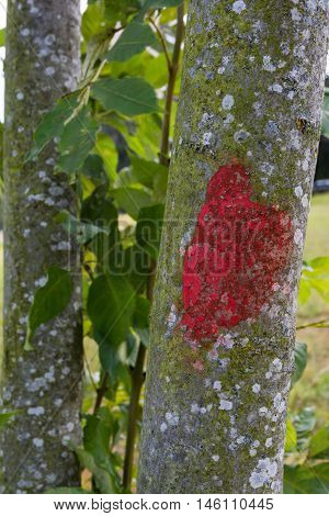 Red Marked Tree Difference Green Contrast Texture Macro