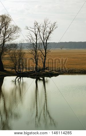 Trees in autumn with tree reflections on the water surface in the Elbe Valley a nature reserve on the Elbe.