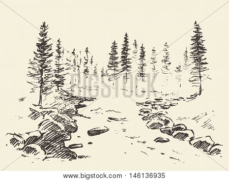Hand drawn landscape with river and fir forest, vintage vector illustration