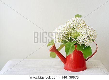 bouquets of Siamese white ixora in small red watering, white flower in vase decorate a tabletop, Thai herb, copy space