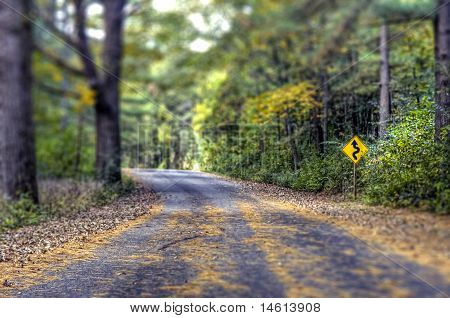 Curves Ahead on a forest road
