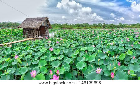 Home on field a place of relaxation to farmers farming, surrounded by lotus blossom across field to create idyllic rustic beauty in countryside