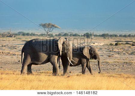 Group of elephants shot in Amboseli park Kenya