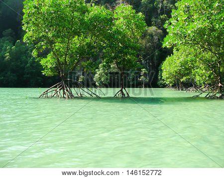 Tropical landscape. Railay beach, Krabi, Thailand. View of the mangrove forest