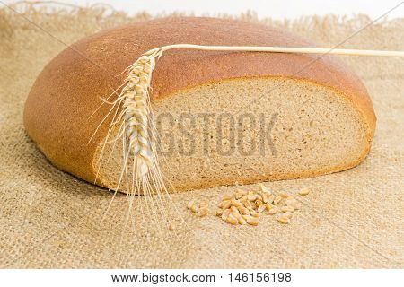 Partly cut round loaf of wheat and rye hearth bread wheat spike and wheat grain on a sackcloth