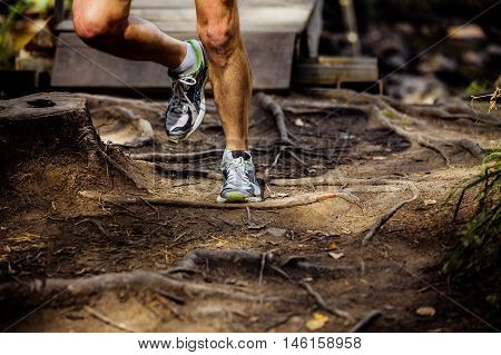 legs male marathon runner running in forest trail earth and exposed tree roots