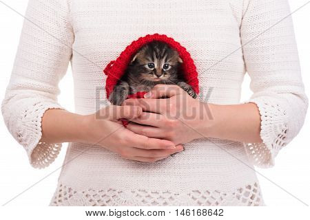 Cute fluffy kitten in the red cap on female hands over white background