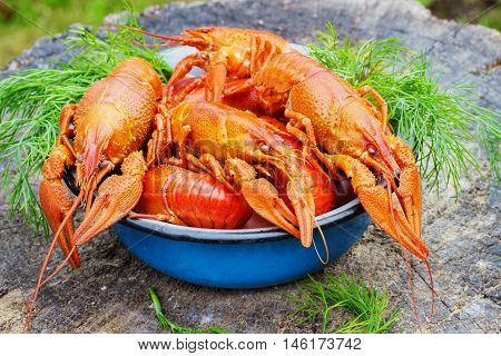 crawfish on old wooden stump in the street a plate