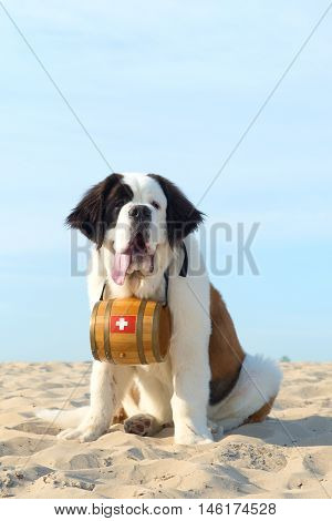Rescue Dog With Barrel