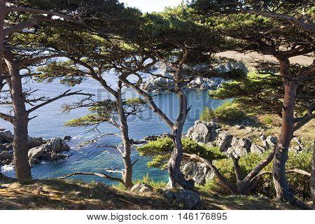 burial pine - Gamow Cape Peninsula Astafieva