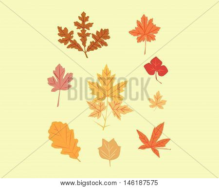 A set of autumn leaves of maples, oaks, amber, against the yellow background