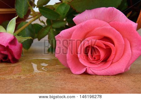 Capsize flower vase with roses. Vase on ceramic tiles. Water leaked out of a vase.