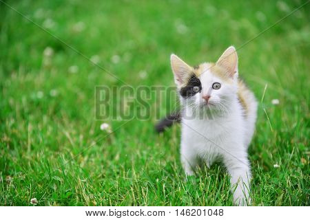 Cute motley cat playing on green grass