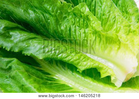 romaine lettuce leaves lush green green textures closeup food background