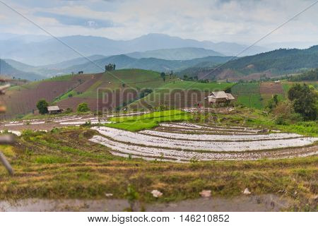 Hut in north Thailand. Pa Bong Piang rice paddy field in Chiang mai Thailand.