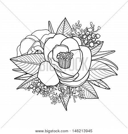 Graphic floral card. Vector camellia leaves and flowers in cute vignette isolated on white background. Coloring book page design for adults and kids