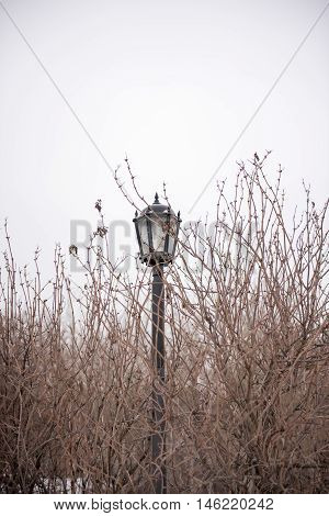 Decoration with lantern and tree branch. Dreamy and abstract photo of antique street lantern among tree branches.