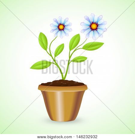 Potted Plant Shows Outdoor Houseplant And Botanic