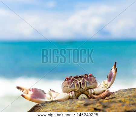 Seafood Posing Pure Threat