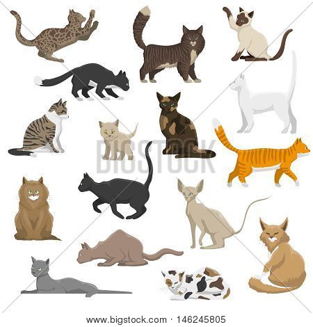 Domestic popular and rare exotic cat breeds flat icons collection with persian and maine coon isolated vector illustration