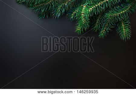 Fir tree Branches over black background with copy space / Christmas or New Year Card