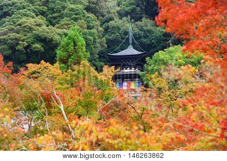 Eikando pagoda with fall foliage color in Kyoto, Japan